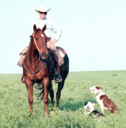 Charlie Trayer With Cowdogs