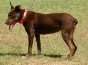 Trayers'Reba <br> Sire:Trayers'Cisco <br>Dam:DryCreekSageoutofTrayers'Smoke